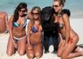 Animale - Maimuta fericita