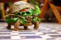 Animale - Broscuta Sandwich