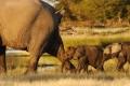Animale - Trebuie s-o urmam pe mama orice ar fi