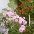 Flori - Tufanele