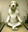 Animale - Un catel meditativ