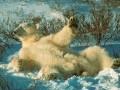 Animale - Ursul la plaja