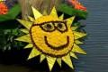 Flori - Floarea soarelui