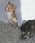 Animale - Acum te prind....!