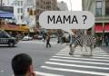 Animale - Mama zebrei