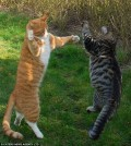 Animale - Pisica batausa si nervoasa